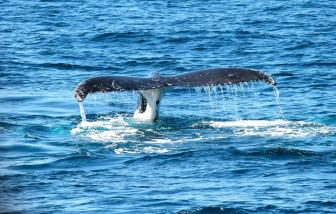 whale watching in costa rica