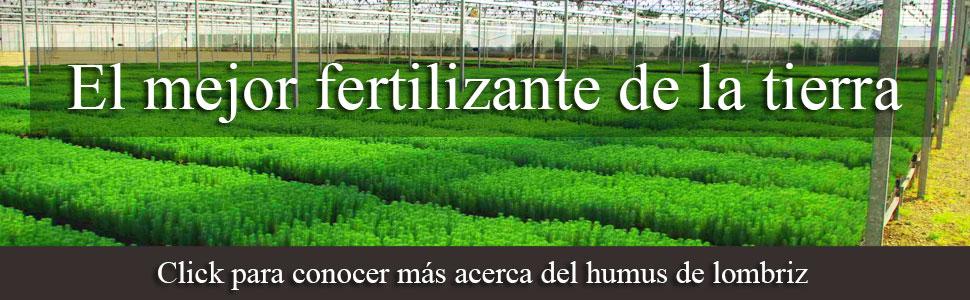 Lombricomposta el mejor fertilizante