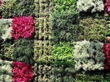 C mo fertilizar un muro verde terranova lombricultores for Materiales para un muro verde