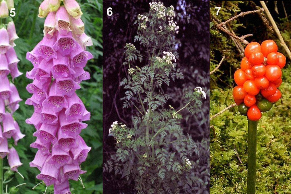 Dangerous Plants and Herbs 1