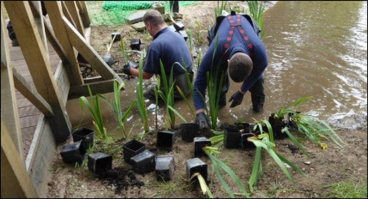terraqua_team_planting