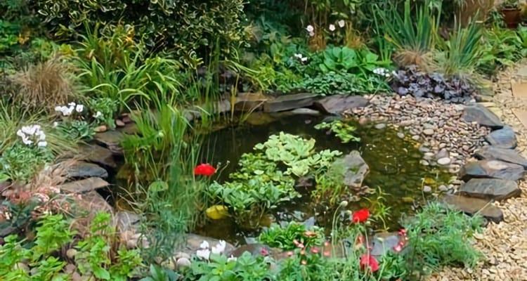 wildlife pond_terraqua_750