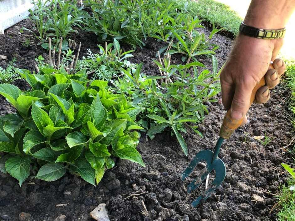 Gardening_hand_in_mud