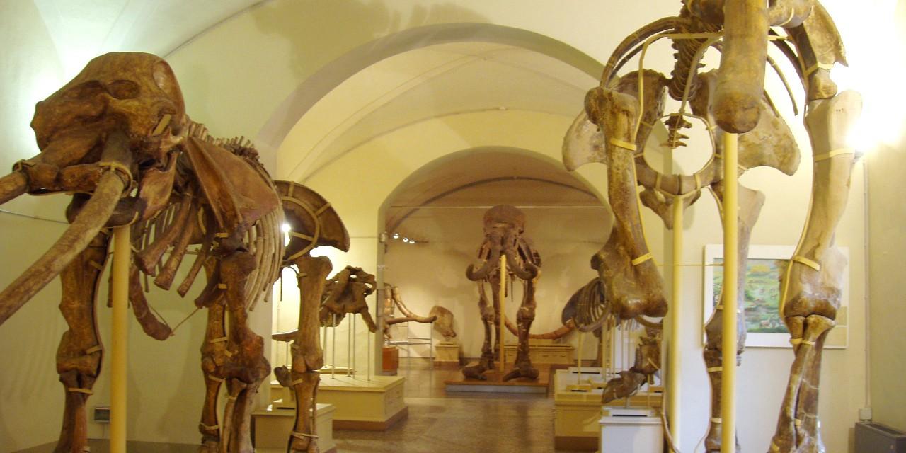 Il Museo di Storia Naturale. Otto sfumature di storia, arte e scienza.