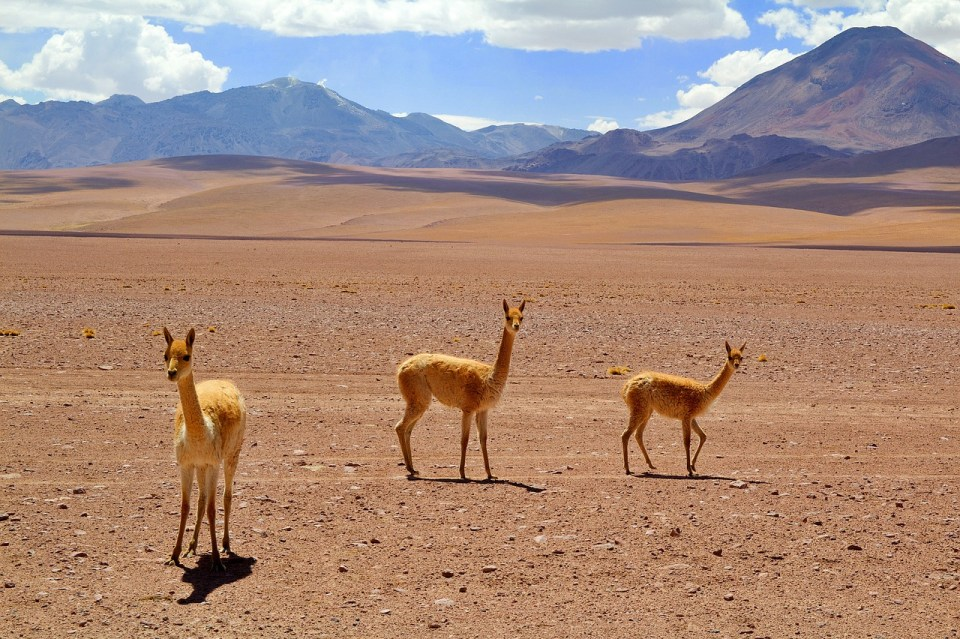 Un tipico paesaggio dell'altopiano andino