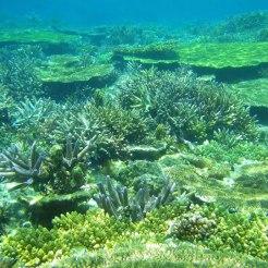 10_珊瑚礁-e1398811241306