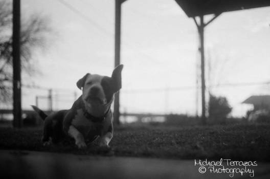 Taken with Canon AE-1 using TMax 100