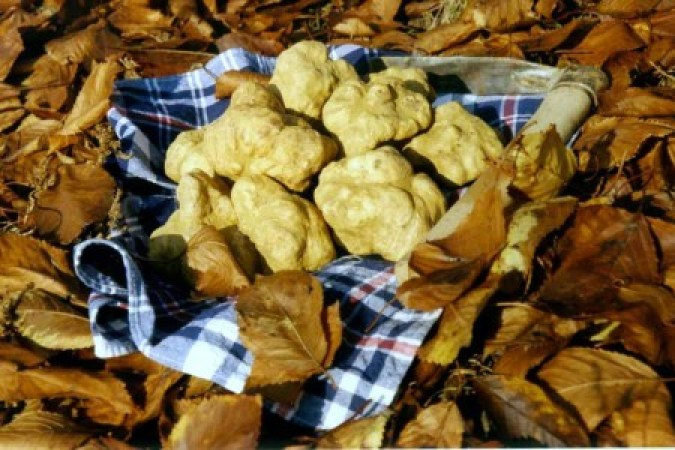VII Truffle fair: 5 november 2017 at 10 am, p. Libertà 2   The searching emotion of esteemed white truffle