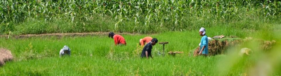 Un mode de vie conditionné par la vie agricole2/2