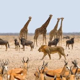 El gran Etosha National Park