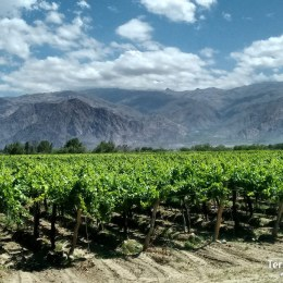 Mendoza. Viñedos y la Cordillera de los Andes