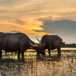 Recorrerem en moto l'illa de Koh Trong allunyats del turisme i gaudint de la realitat de la vida quotidiana cambodjana.