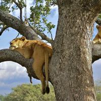 Safaris y Vida Salvaje
