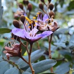 Harare i els jardins botànics