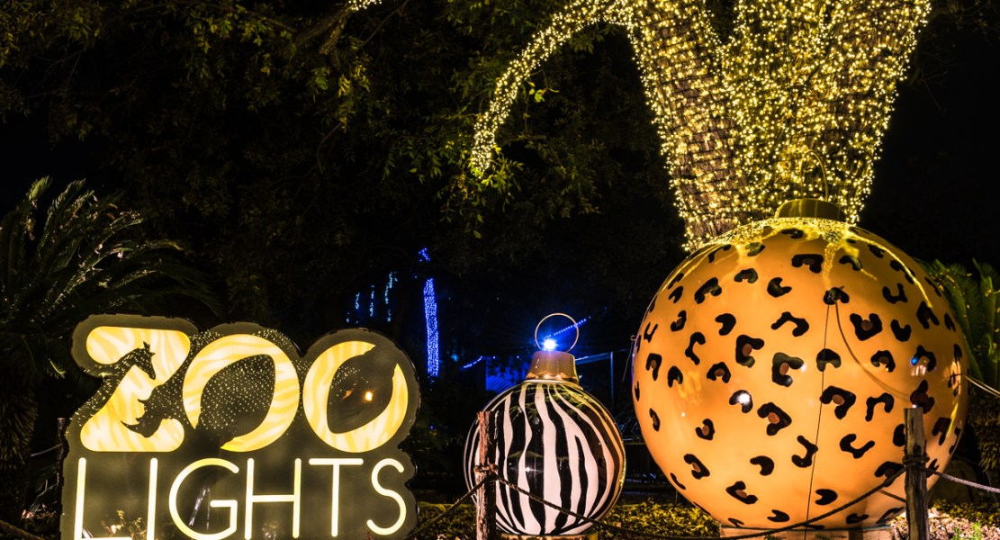 Holiday Lights at the Zoo