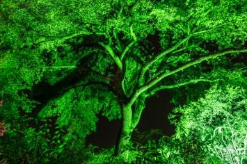 Zoo Lights_7515