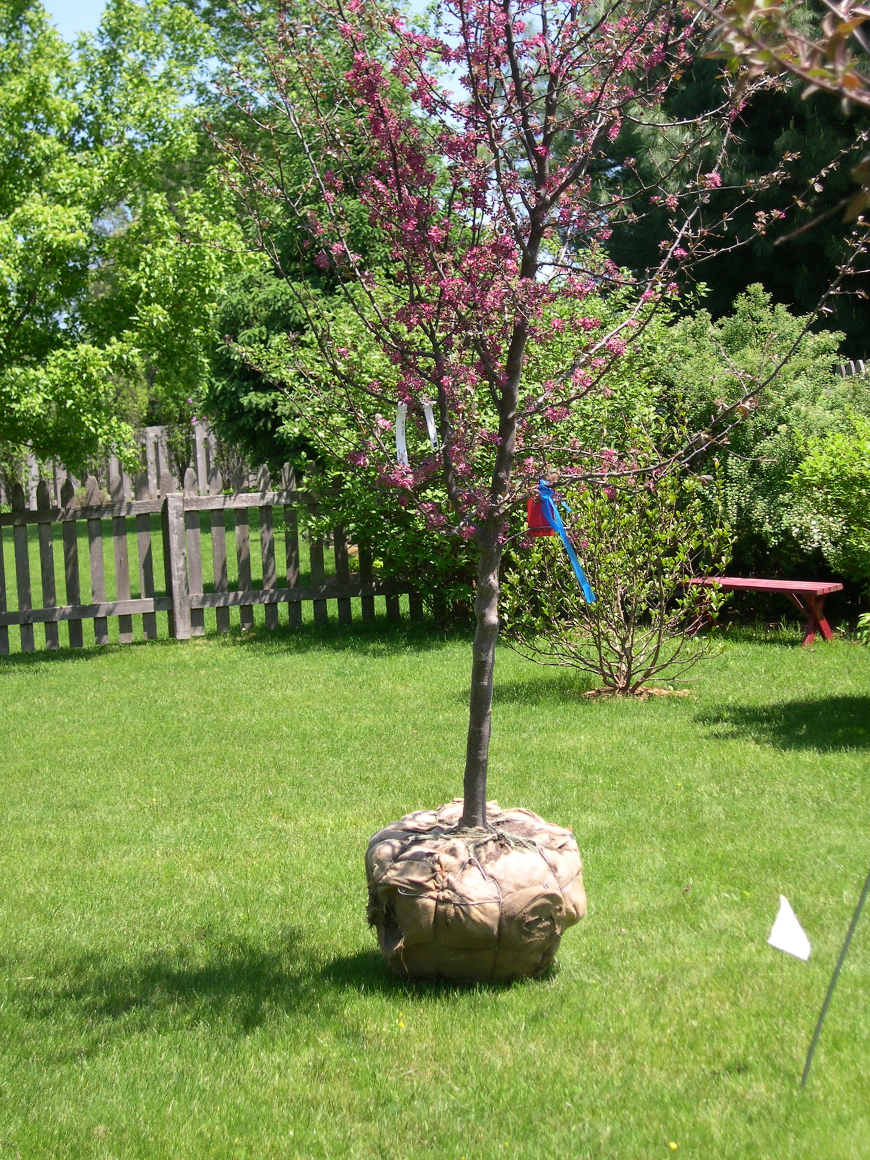 two new tree