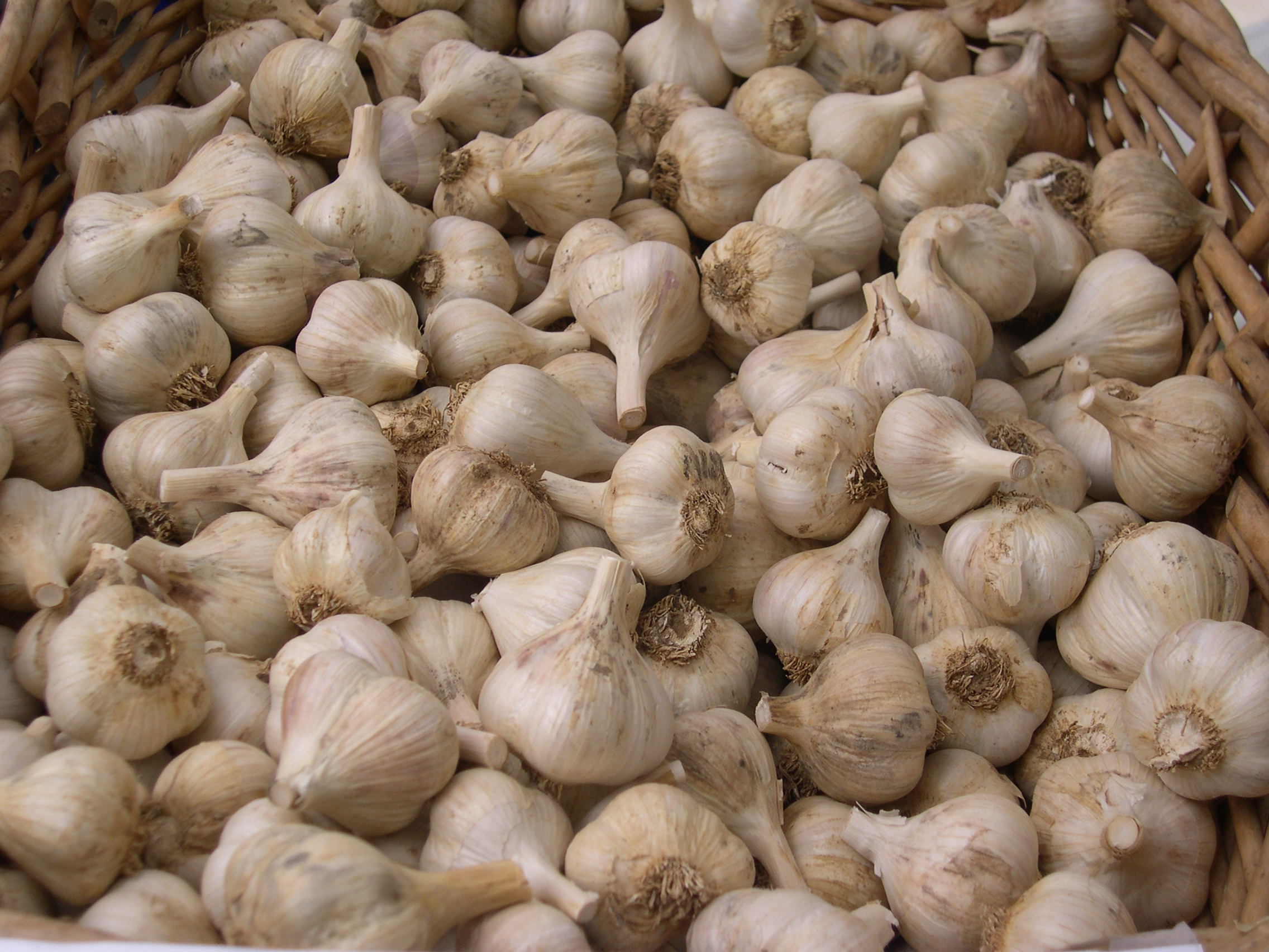 piles of garlic