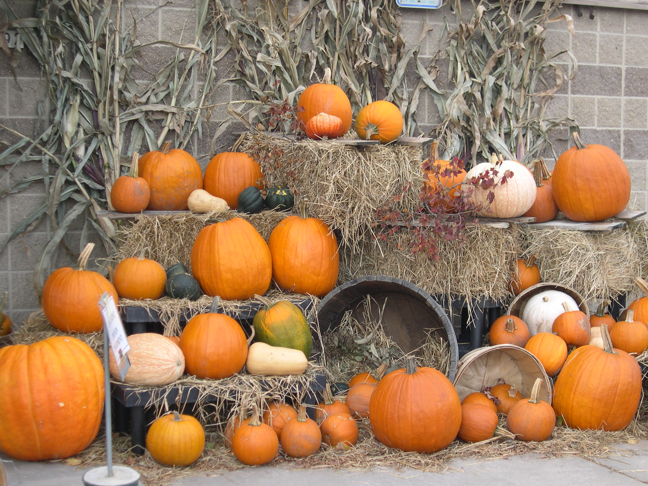 pumpkin display2