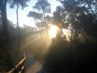 Viareggio - Pineta - 2012 11 24 - IMG_1421