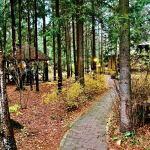 Хотите купить земельный участок в деревне Глаголево (Наро-Фоминский район)? Звоните по телефону 8 (800) 444-64-58   Агентство недвижимости Территория. Фото 5