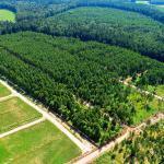 Хотите купить земельный участок в КП Beketovo Park (д. Бекетово, Ступинский район)? Звоните по телефону 8 (800) 444-64-58 | Агентство недвижимости Территория. Фото 10