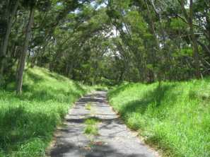 Mauna Loa Road Except for the uphill parts, a perfect place to run a marathon