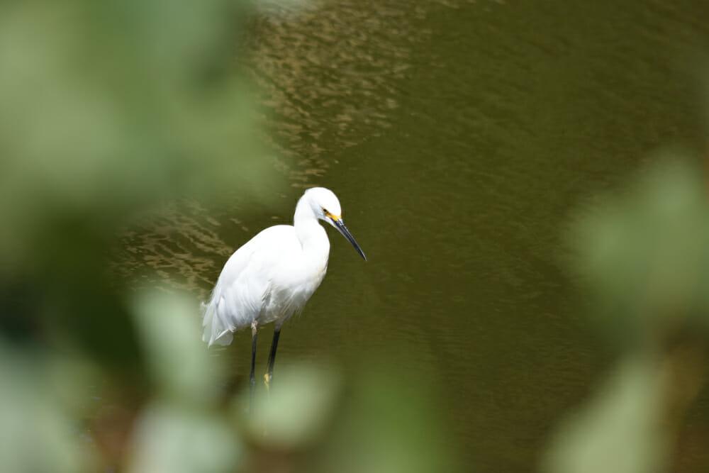 I love egrets...they seem so majestic.