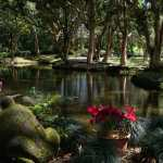 Friday Fotos — Byodo-In Temple lagoons are lush and serene