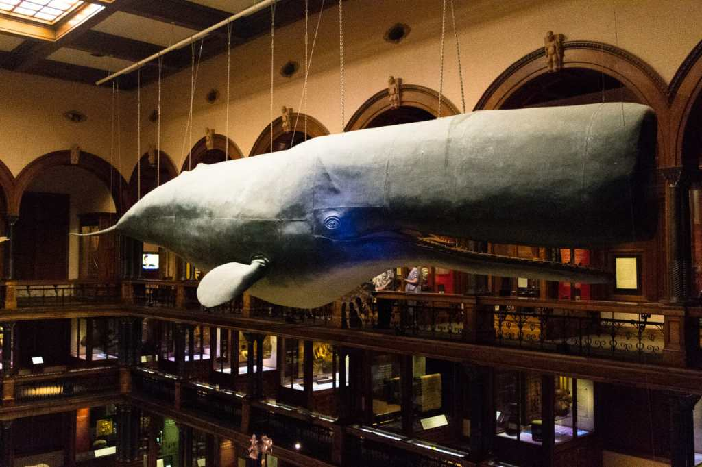 A whale of a time at Bishop Museum