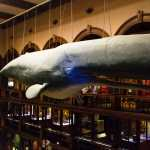 Friday Fotos — a whale of a time at Bishop Museum