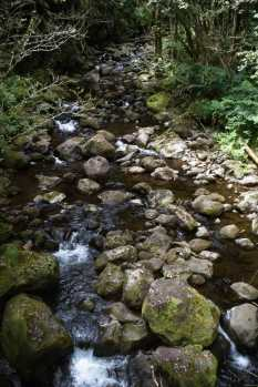 Big Island back country stream