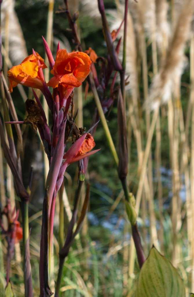 Monarch Cove Inn flowers