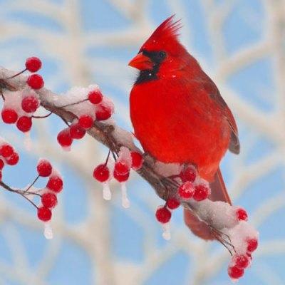 Winter Cardinal Zen Puzzle - Medium