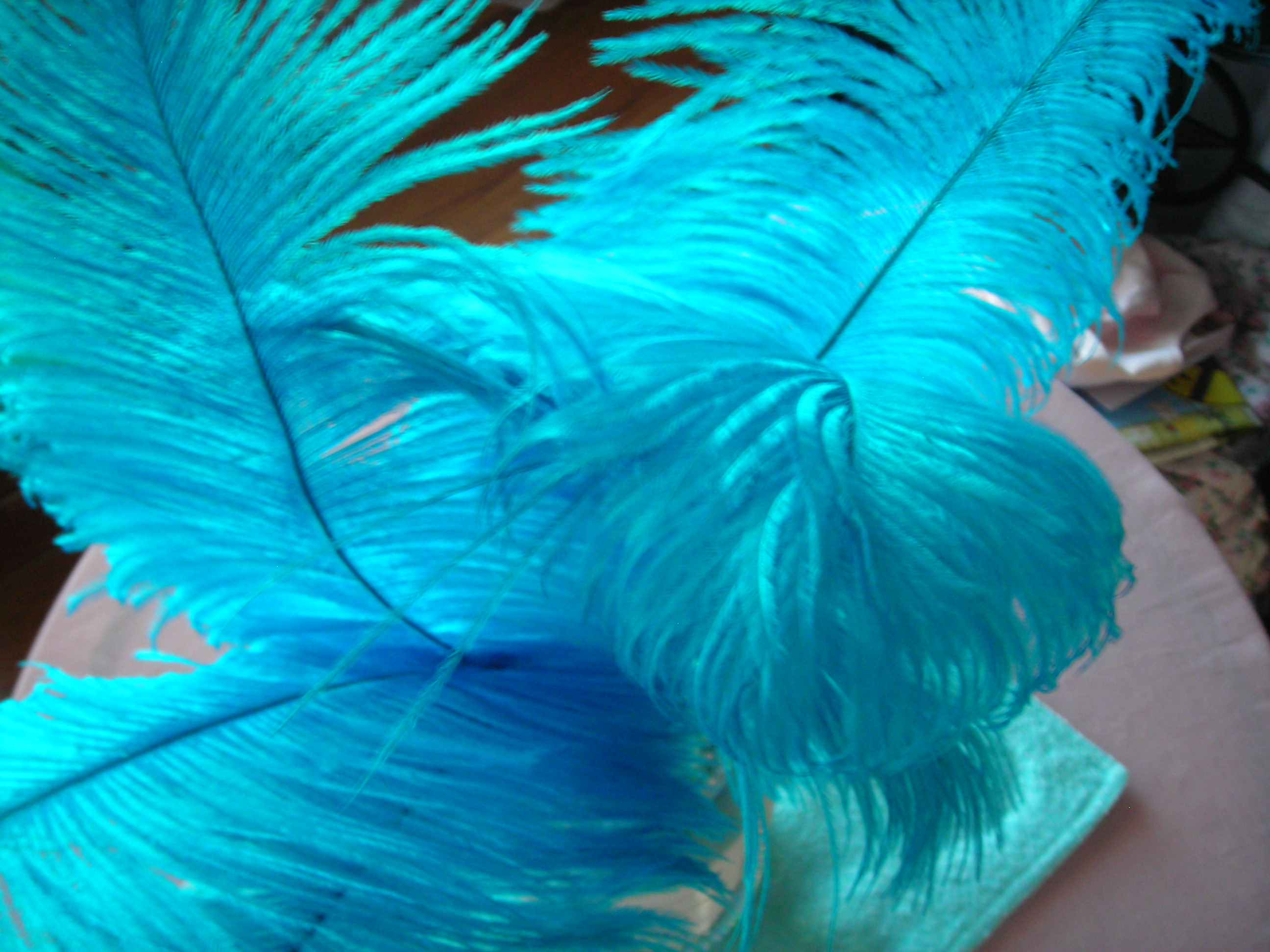 love these turquoise feathers!!