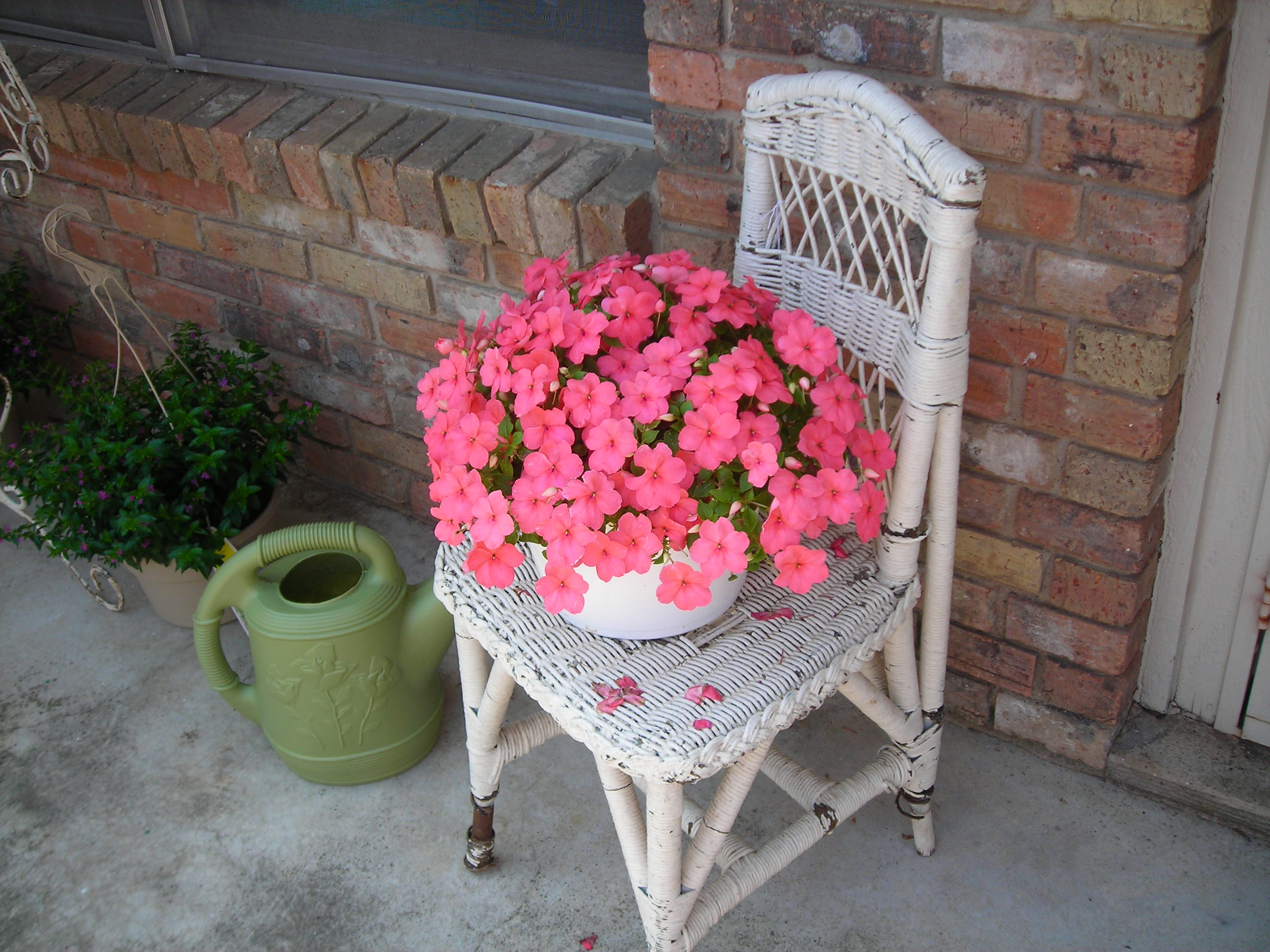 the little white wicker chair (from sue's) is perfect for my flowers!