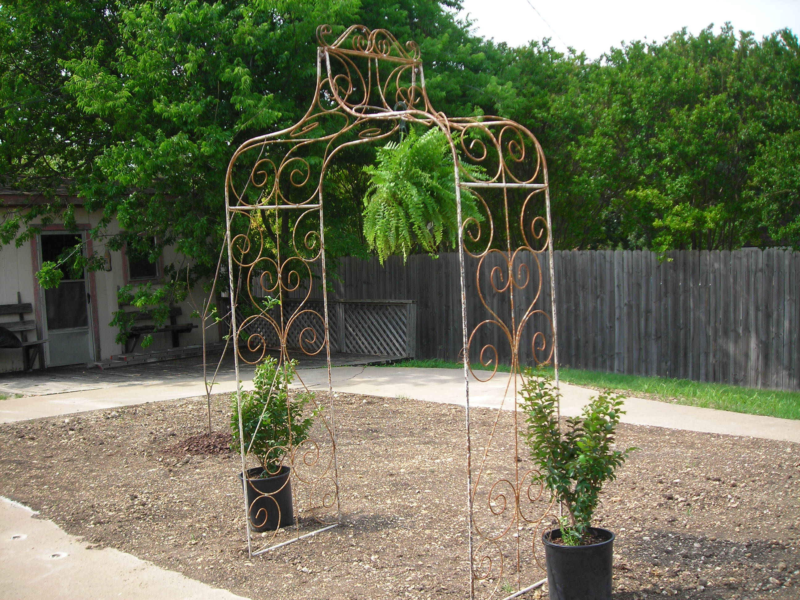 great rusty crusty arch for my garden. it's flanked by two crepe myrtles which are still in need of planting ...