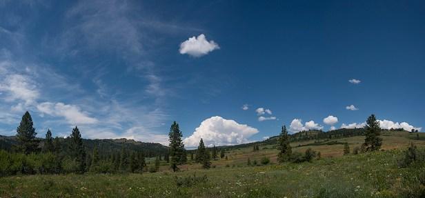 Blue Field, Shultz Ranch, Sweet Ola Valley, Idaho
