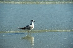 seagull-reflection-in-water-800x534