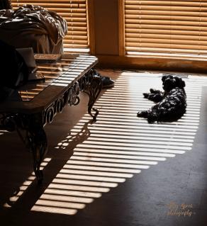 Mishka and shadows 900 020