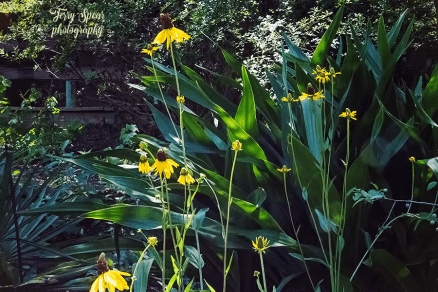 yellow flowers at nature center 900 116