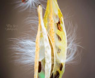 seeds 900 025