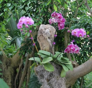 Orchids, Moody Gardens