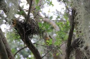 bird's nest (800x533)