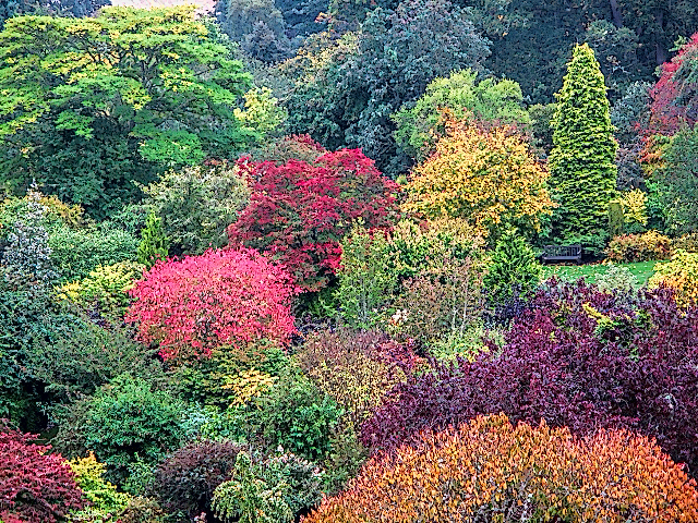 crathes gardens sharp and colorful (640x480)