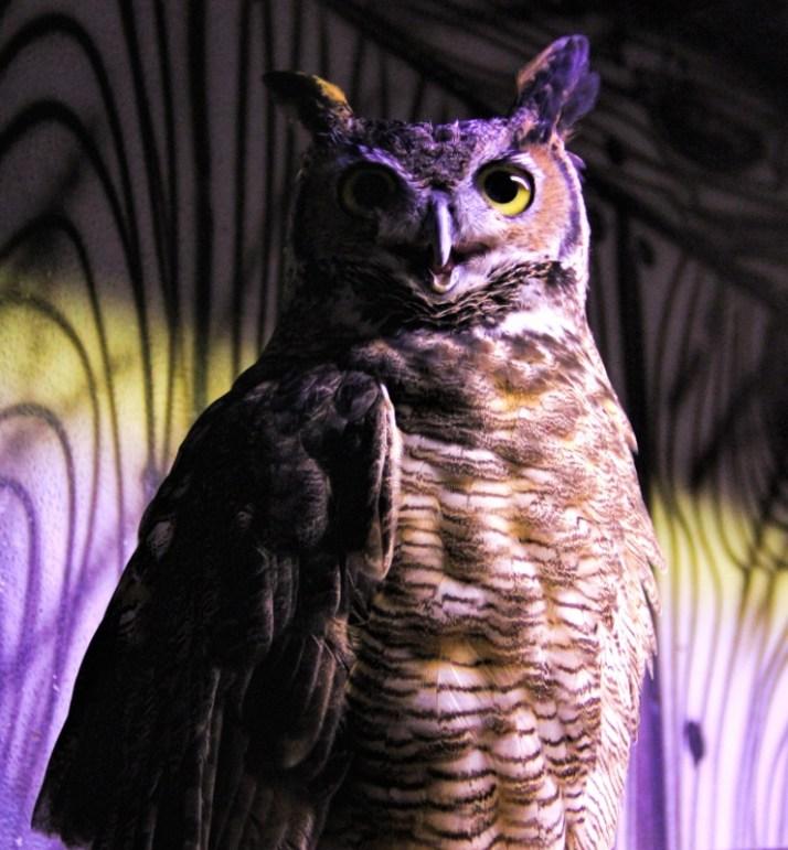 Owl, enhanced copy (740x800)