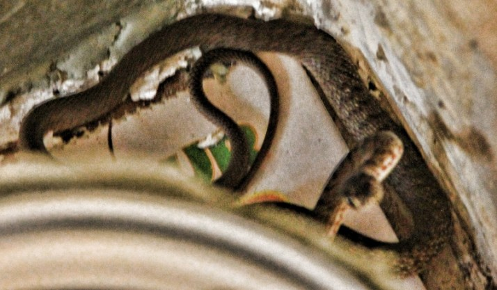 snake in house 001 (800x468)