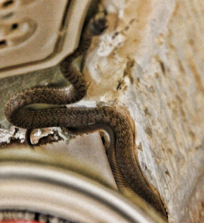 snake in house 003 (732x800)