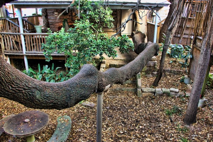 tree branch backside of shop1 (800x533)