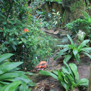 jungle 7 (640x640)